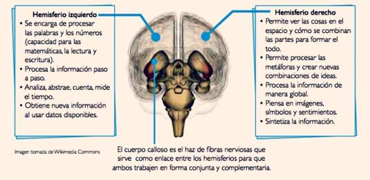 funciones-hemisferios-cerebrales